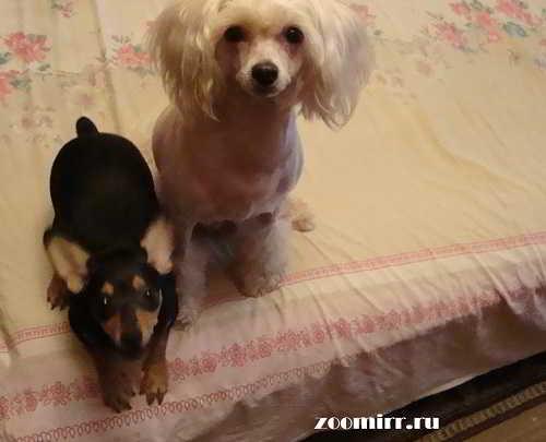 Моя любимые собаки