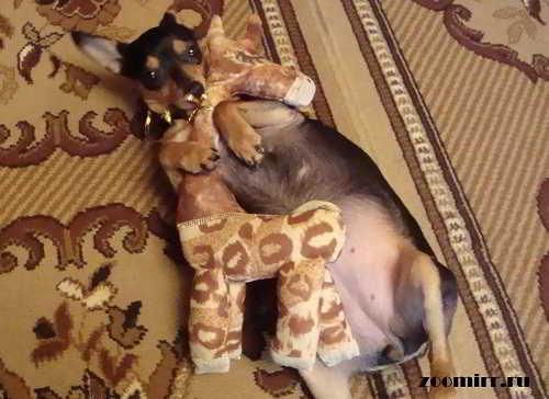 Любимая собака номер два