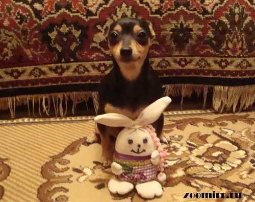 Любимая собака Бусинка