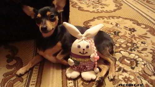 Бусинка и заяц