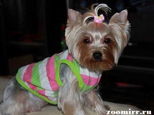 Собачья одежда