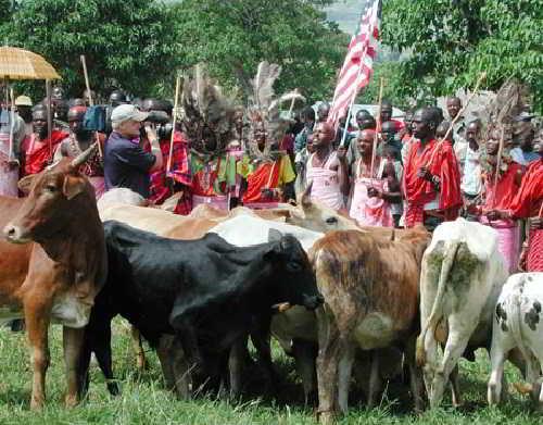 Масаи и их скот