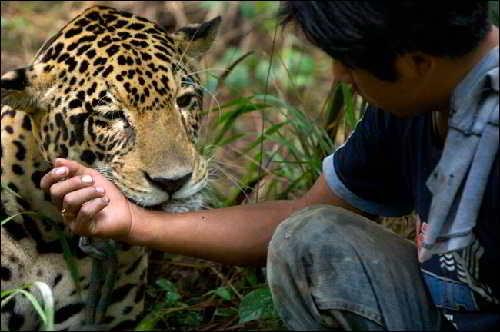 Берегите животных