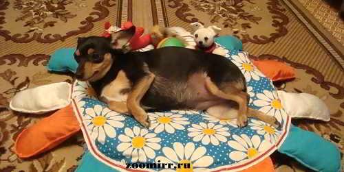 Лежанка для собаки