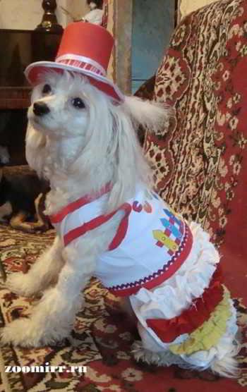 Лялечка в новом платьице