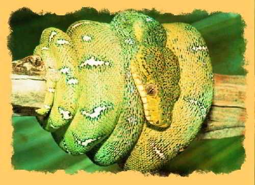 Как выглядят змеи