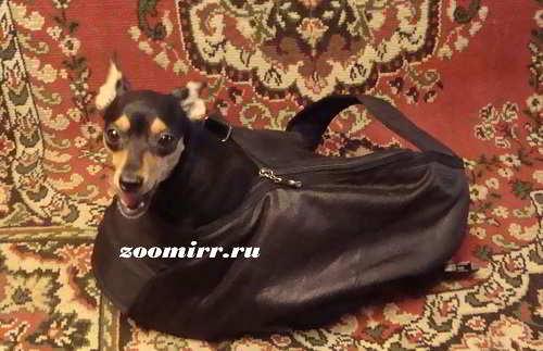 Рюкзак почтальон для собаки
