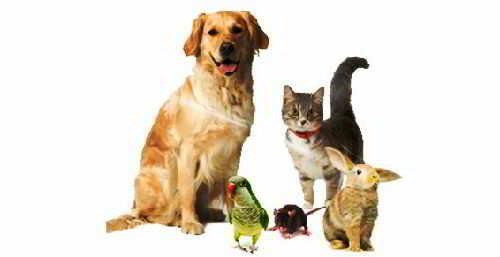 Животные лечат людей