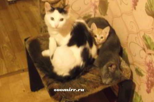 Про котят котов и кошек