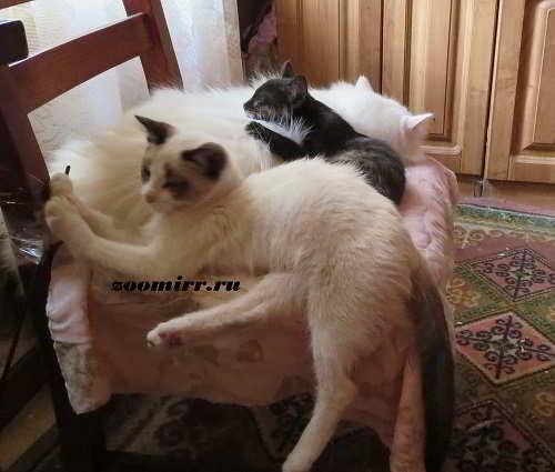 Кошки,коты и котята