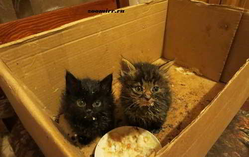 Про котят.котов и кошек