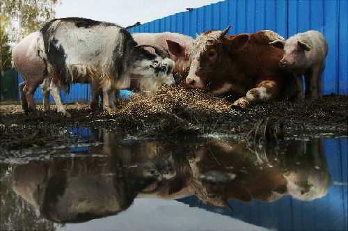 Животные в пострадавших районах