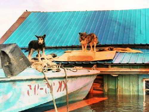 Наводнение и животные
