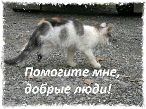 Помогите котенку