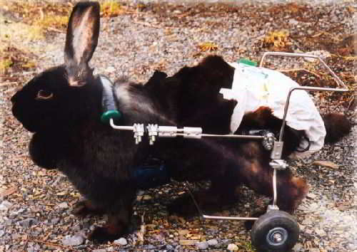 Животные инвалиды