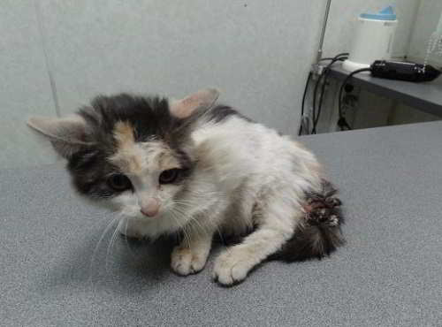 Помогите котенку добрые люди