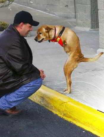 Необычная собака Фейт