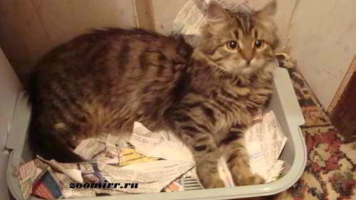 Котенок Нафаня