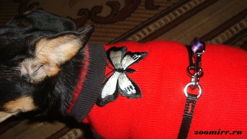 Шлейки для щенков своими руками фото 925