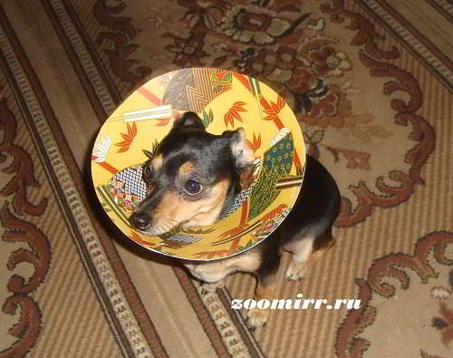 Воротник для собак