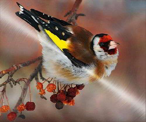 Зимовка птиц | ЗООМИР