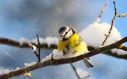 Зимовка птиц