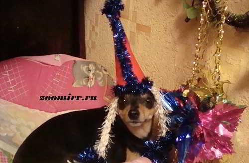 Новогодний колпак для животных