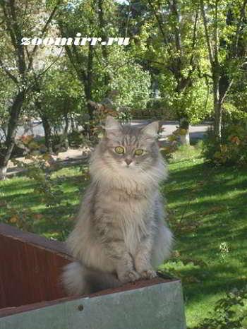 Кошка Маню