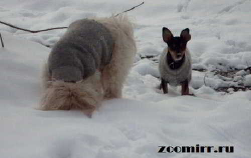 sneg snezhok