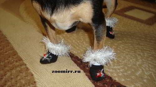 Лапки Бусинки в носочках