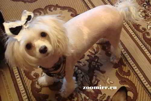 Эндометрит у собак