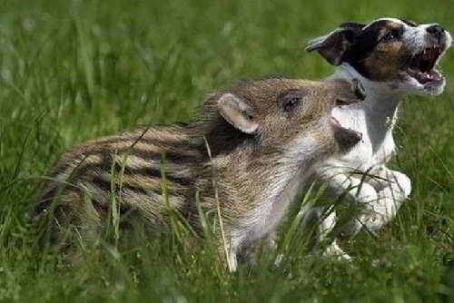 Странная дружба животных