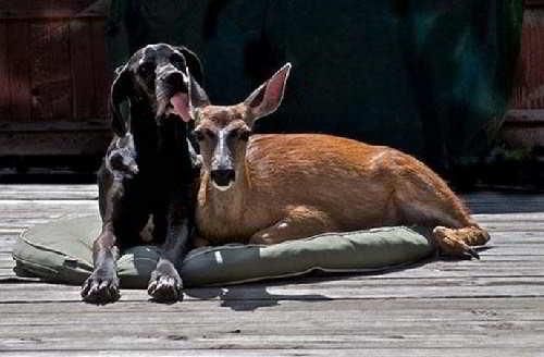 Собака Кейт и олень Пиппин