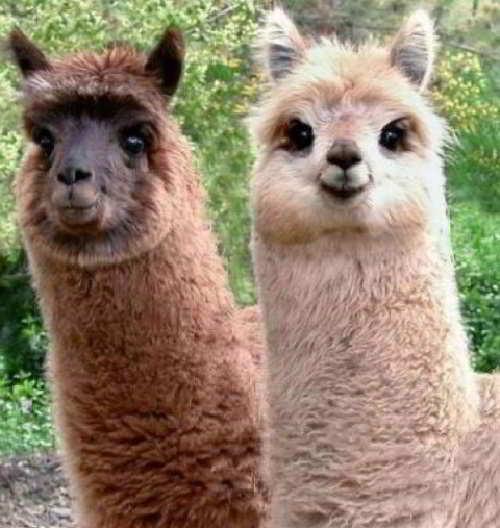 Фото необычных животных
