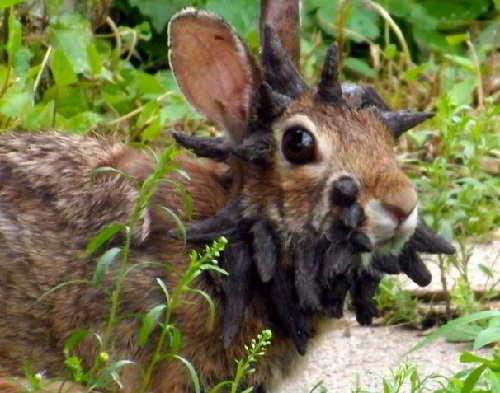Необычный заяц