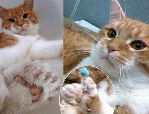 Кот с двадцатью пальцами
