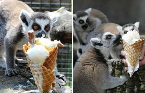 Мороженое любят все!