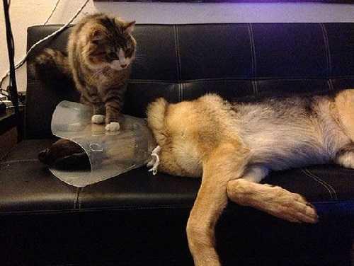 Поход к ветеринару.Фото подборка.