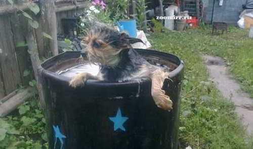 Принимаем ванну в бочке
