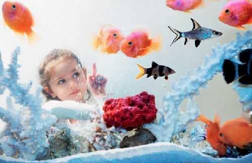 Домашний доктор-аквариум
