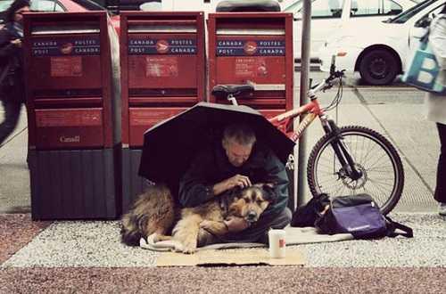 Верный друг собака
