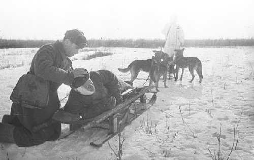 Собаки вывозили раненых