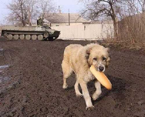 Помощь животным Донбасса