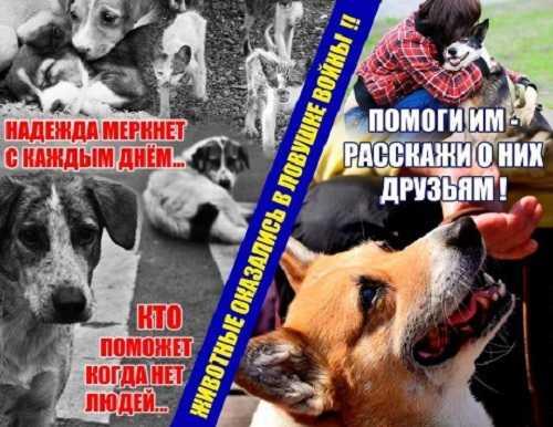 Животные Донбасса