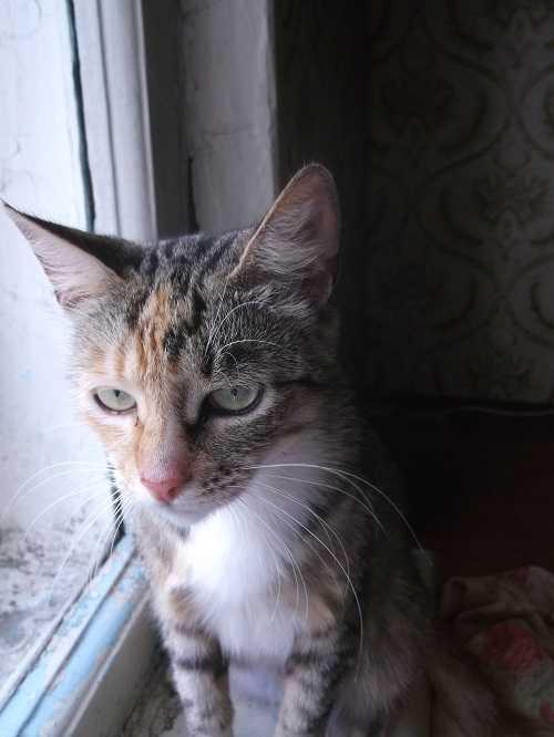 Блокадный кот Василий