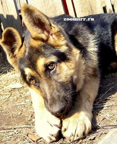 Странное поведение собак