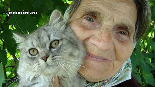 Четвероногий друг для бабушки