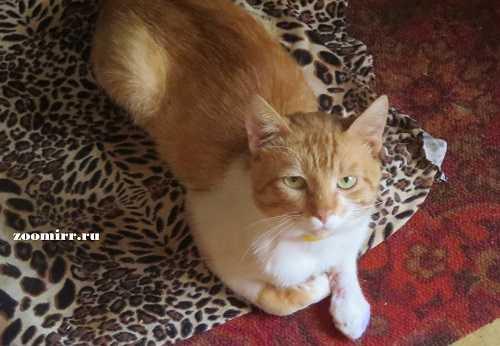 Вторая жизнь кота Федота