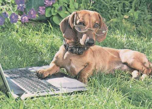 Интеллект собаки