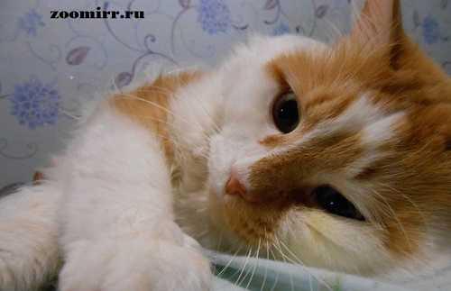 Можно ли кастрировать кота